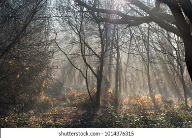 wide angle sunlit forest