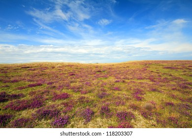 Wide angle view of a beautiful heather colored moorland against a blue autumn sky