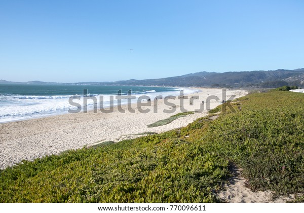 Wide angle view of the curved shoreline of a Northern California beach, with white foam waves crashing on the sandy shore, below green succulents and a clear blue sky