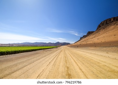 Wide angle view of gravel road next to a huge irrigated grape field and desert mountains on the right side near the town of Aussenkehr in southern Namibia near the South African border. Fenced fields