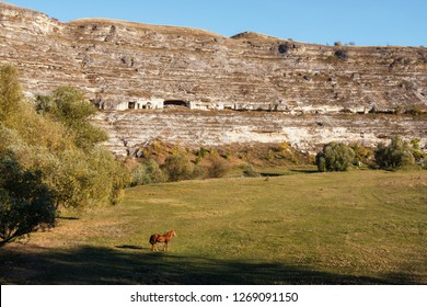 Wide angle view to Orheiul Vechi canyon in Moldova. Sunny day with no clouds. One hores in the foreground eating grass. Moldovan wildlife. Horizontal shot
