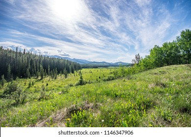 Wide angle view standing in a grassy field looking out at the pine tree covered valley with mountain views. Beautiful summer day hiking Moose Meadows Loop Trail in Bragg Creek, Alberta, Canada.