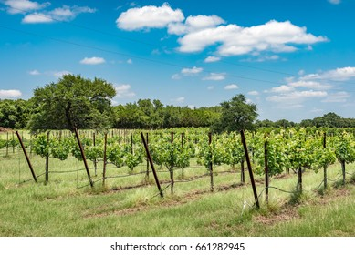 Wide angle view of the vineyard with trees in the background