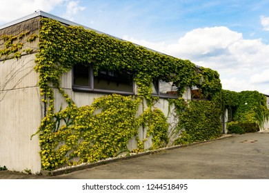 Wide building with one side almost completely covered by green vines in front of open lot and blue sky with puffy clouds above