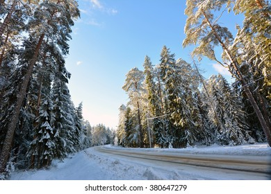 Wide car road in a snowy winter forest with tall pine trees and blue sky.