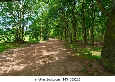 A wide, deserted sunlit path between the trees of Sherwood Forest on a summer morning