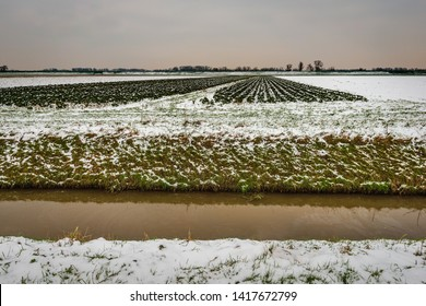 Wide Dutch polder landscape in the winter season. The fields and crops are covered with a layer of snow. A ditch is in the foreground. The sky is overcast. The photo was taken in North Brabant.