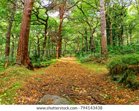 A wide, footpath covered with golden leaves passes between rows of tall trees in a Derbyshire woodland.