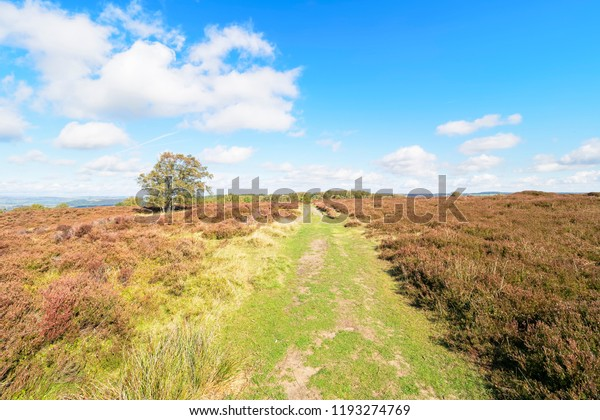 A wide footpath leads across Stanton Moor in the Derbyshire Dales. A lone Silver Birch stands off to the left.