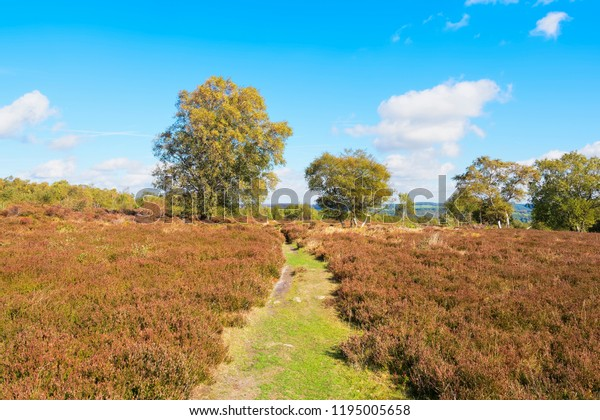 A wide grass footpath leads between two tall trees anidst heathers and ferns on Stanton Moor in Derbyshire