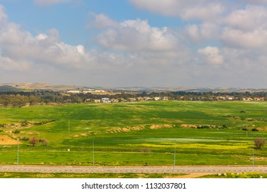 Wide green field in desert Negev near Beer-Sheba at spring