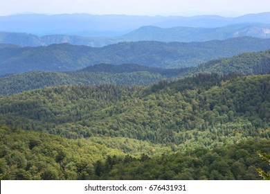 wide and green overview over heavily forested row of mountains and hills