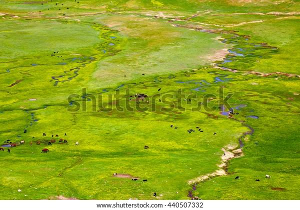 the wide green valley with the rivers and the grazed animals in the early spring, in a sunny day