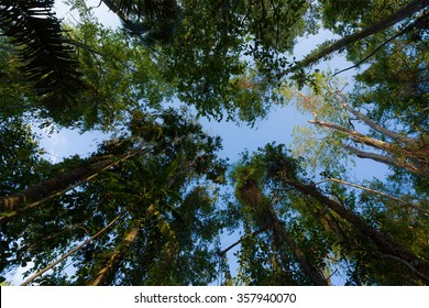 wide ground view of treetops in the rain forrest north sulawesi, indonesia