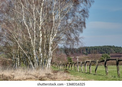 Wide heath landscapes to the horizon, huge paddocks with old wooden fences, the Lueneburg Heath offers its visitors also in the spring an unforgettable nature experience.