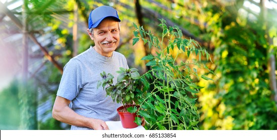 Wide horizontal picture of greenhouse worker