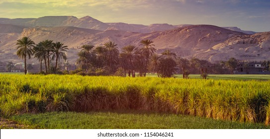 Wide landscape with a sugarcane plantations in the Nile valley of Egypt - green fields, palms and mountains on a skyline. Traditional agriculture and industrial farmland in tropical climate of Africa.