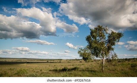 Wide landscape with tree