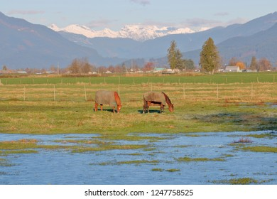 Wide, landscape view of two adult horses grazing in a mountainous wetlands region of southern British Columbia, Canada.