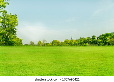 Wide lawns and ornamental trees and green forests