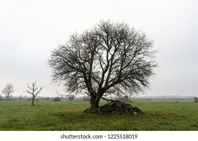 Wide lone tree in a green grassland by fall season