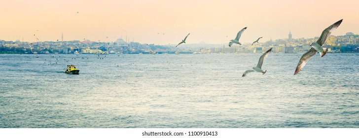 Wide panorama of Istanbul on Golden Horn Bay with flying birds. Sea route between Europe and Asia - seashores of Istanbul on sunrise. Tourist attractions around the Bosphorus strait.