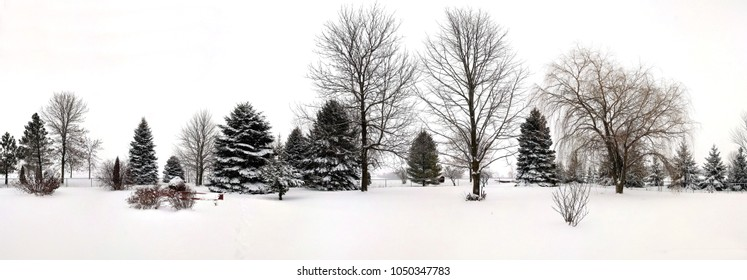 Wide panorama view of a row of evergreens and other trees, covered in fresh snow from a Winter storm. Peacful, quiet open space in front and sky. Copy Space