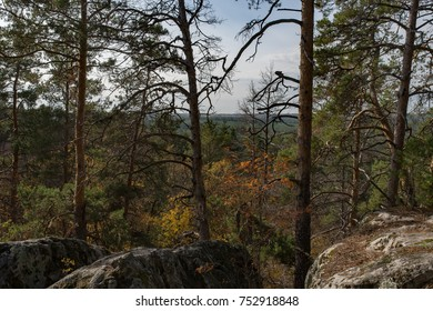 Wide panorama of Wild forest, Samara, Russia
