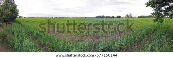 wide-panoramic-view-farm-field-600w-5771