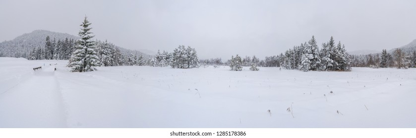 Wide panoramic view of winter landscape with snow covered trees in Seefeld in the Austrian state of Tyrol. Winter in Austria