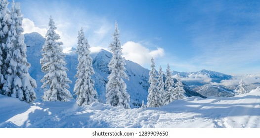 Wide panoramic view of winter landscape with snow covered trees and Alps in Seefeld in the Austrian state of Tyrol. Winter in Austria
