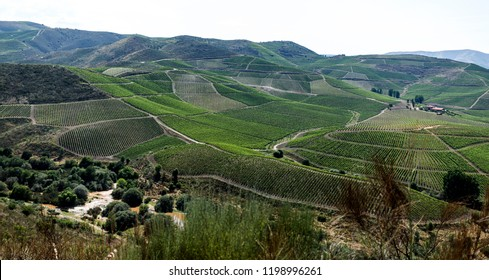Wide panoranic view of the vineyards on the Coa River Valley in Northern Portugal