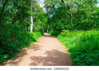 A wide path with trees, wildflowers, ferns and brambles on either side through Sherwood Forest