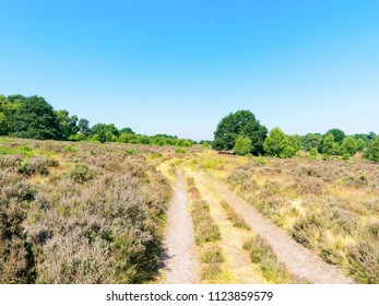 Wide rutted track passes between lush heather and fern moorland towards distant trees. Budby South Forest in Nottinghamshire.