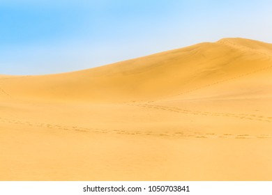 Wide sand dune with path of footprints and blue sky in Tottori, Japan (copy space)