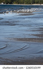 Wide sandbar waves with seagulls at Outlet Beach of Sandbanks Provincial Park in Prince Edward County on Lake Ontario