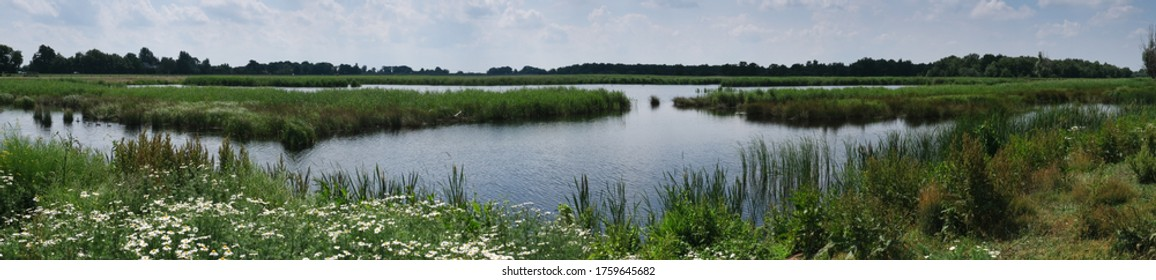 Wide screen landscape photo with lakes, swamps and reeds in National Park De Weerribben near Giethoorn, the Netherlands