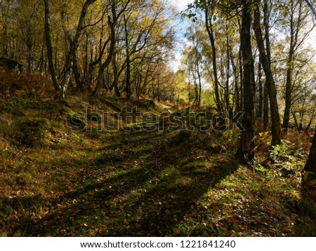 A wide shaded path runs along a hillside in Froggat Woods on an autumn morning