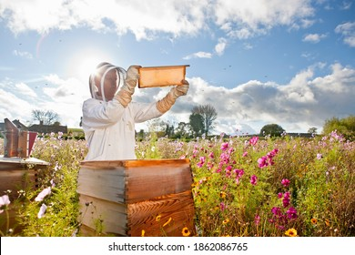 Wide shot of a beekeeper holding the beehive frame filled with honey against the sunlight in the field full of flowers