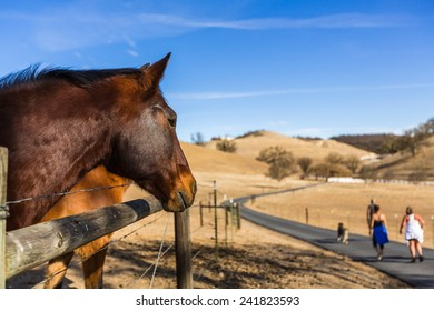 Wide shot of brown horse to the left looking at people and a dog walking away down a road with blue sky in the background