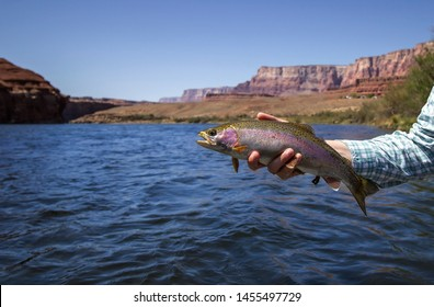 Wide shot of Woman Holding  Rainbow Trout Caught Fly Fishing At Lees Ferry with Colorado River and Vermillion Cliffs in background.