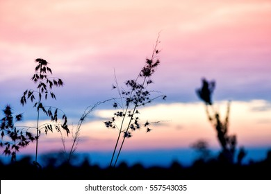 Wide silhouette of long grass/ plants on summer evening