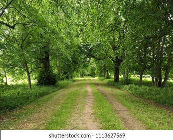 Wide track through green trees in a country park in summer