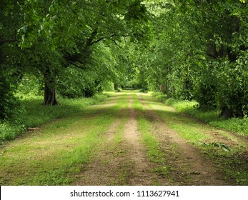 Wide track through green trees in a park in summer