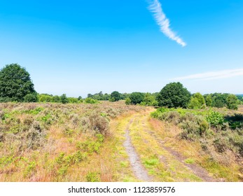 A wide track winds its way across lush, tree dotted, moorland under a blue summer sky. Budby South Forest in Nottinghamshire.