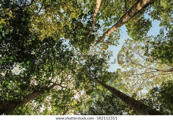Wide tree background