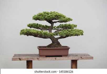 a wide variety of bonsai plants are placed in the flower garden