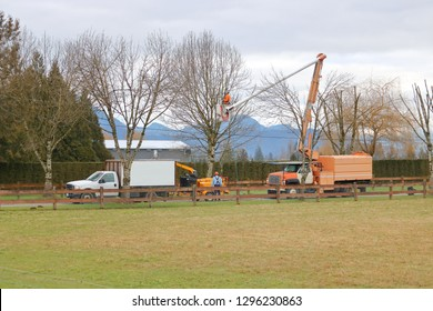 Wide view of arborists, tree surgeons, or arboriculturists, using various industrial equipment to trim winter trees.