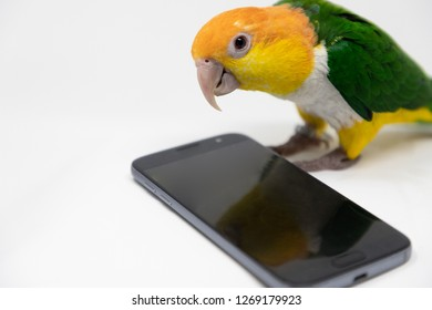 Wide view of a curious bird is looking into a cellphone