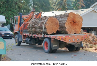 Wide view of a flatbed truck loaded with two pieces cut from a 100 year old Cedar tree removed from a private residence.